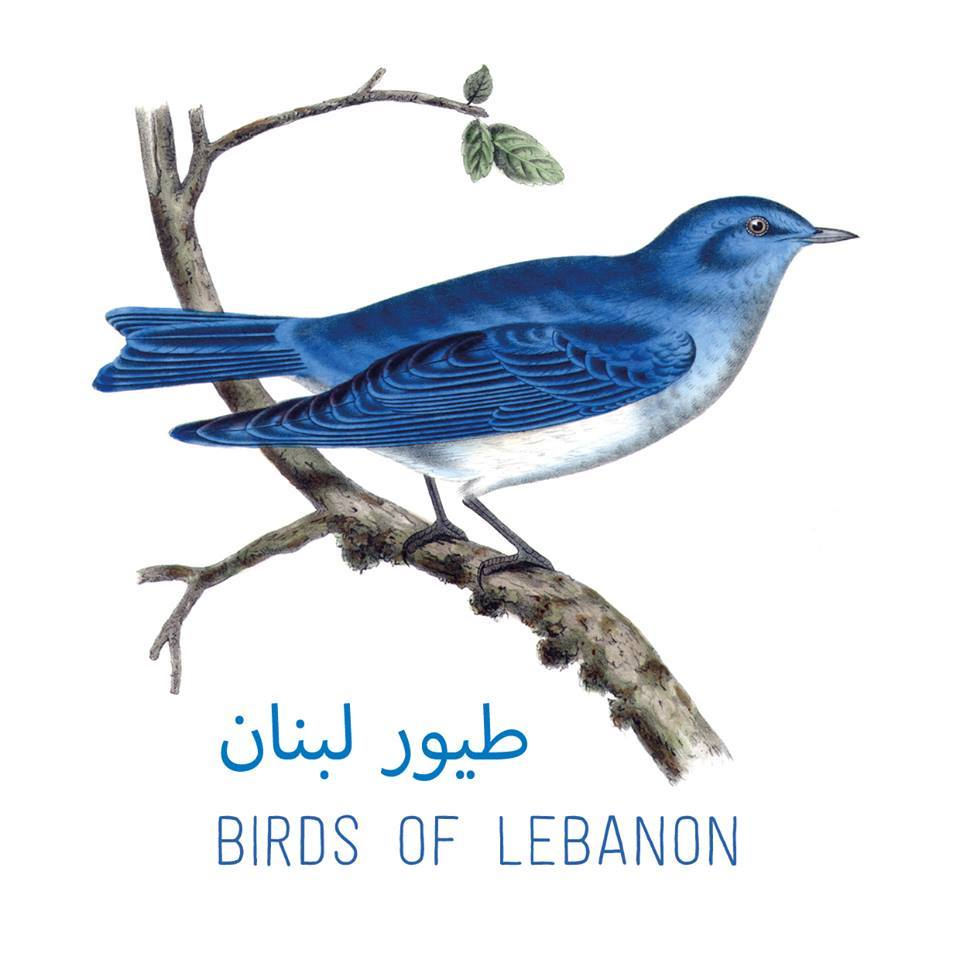 Birds of Lebanon